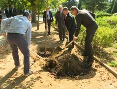 """Elindult az """"1000 fa ültetése"""" program"""